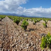 mallorca-wine-tours-train-gourmet-31