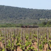 mallorca-wine-tours-train-gourmet-37
