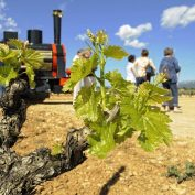 mallorca-wine-tours-train-gourmet-43