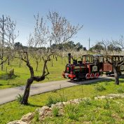 mallorca-wine-tours-train-gourmet-55