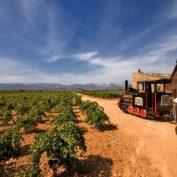 mallorca-wine-tours-train-gourmet-56