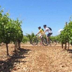 mallorca-wine-tours-bike-tour-07