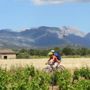 mallorca-wine-tours-bike-tour-13