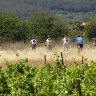 mallorca-wine-tours-bike-tour-14