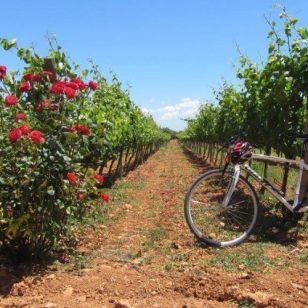 mallorca-wine-tours-bike-tour-15