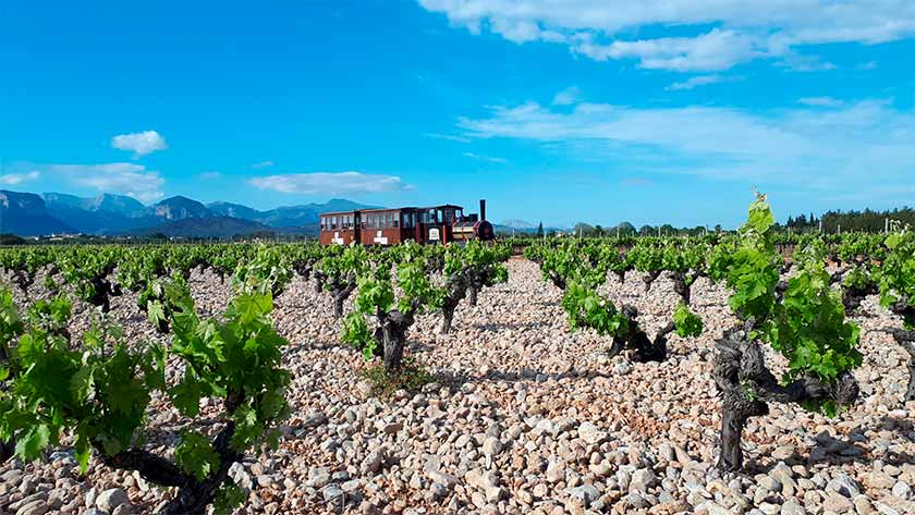 wine train tour in mallorca