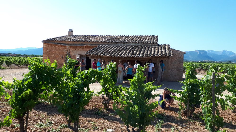 Mallorca Wine Tours - Train Gourmet Tour